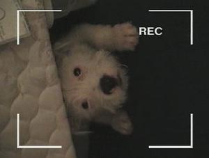 Theedgarwinterdogvideo